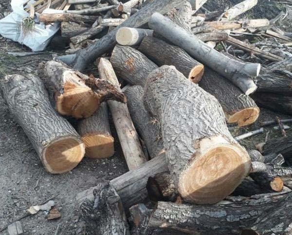 خریدار تنه درخت