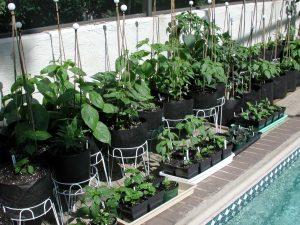 کاشت سبزی در آپارتمان