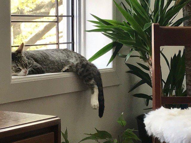 نگهداری گربه در آپارتمان