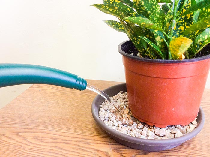 در نگهداری از گیاهان آپارتمانی
