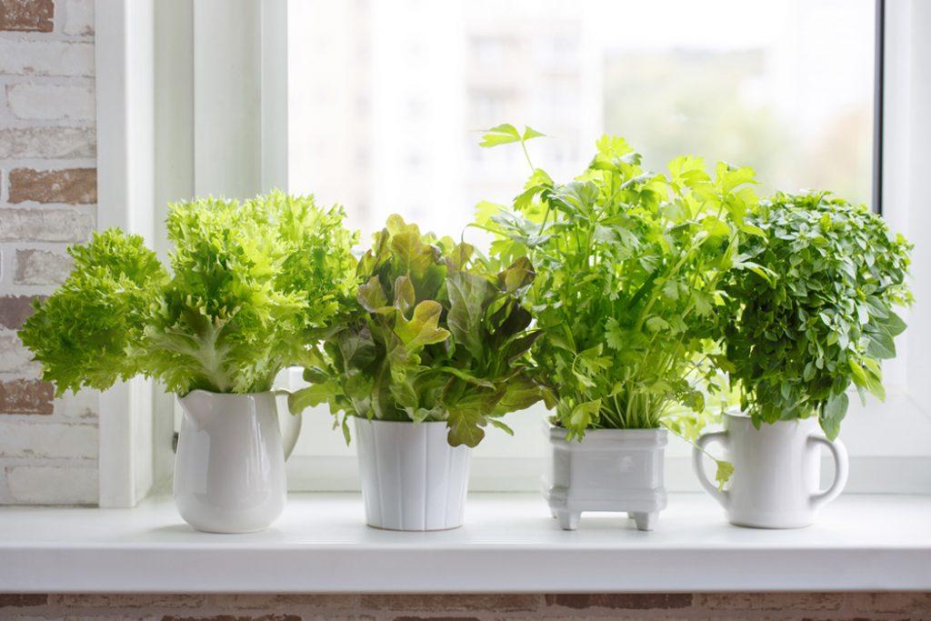 زیبایی خانه با گیاهان