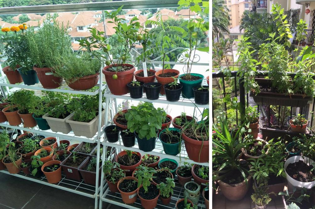 کاشت و پرورش سبزی و گیاهان در گلدان