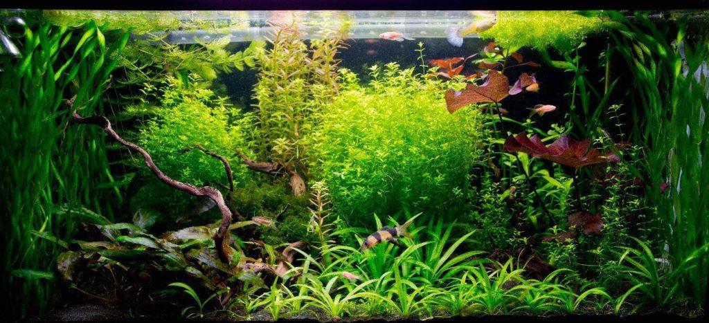 آکواریوم گیاهان دریایی