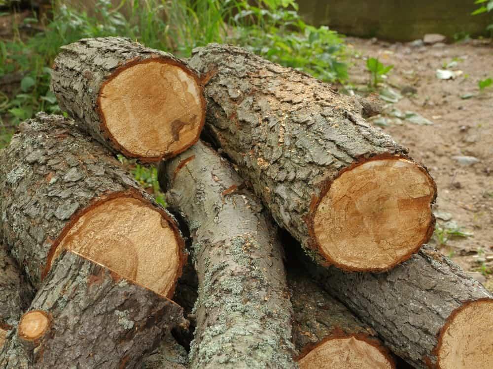 چوب توسکا